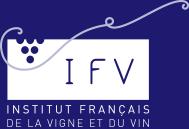 ifv-blanc